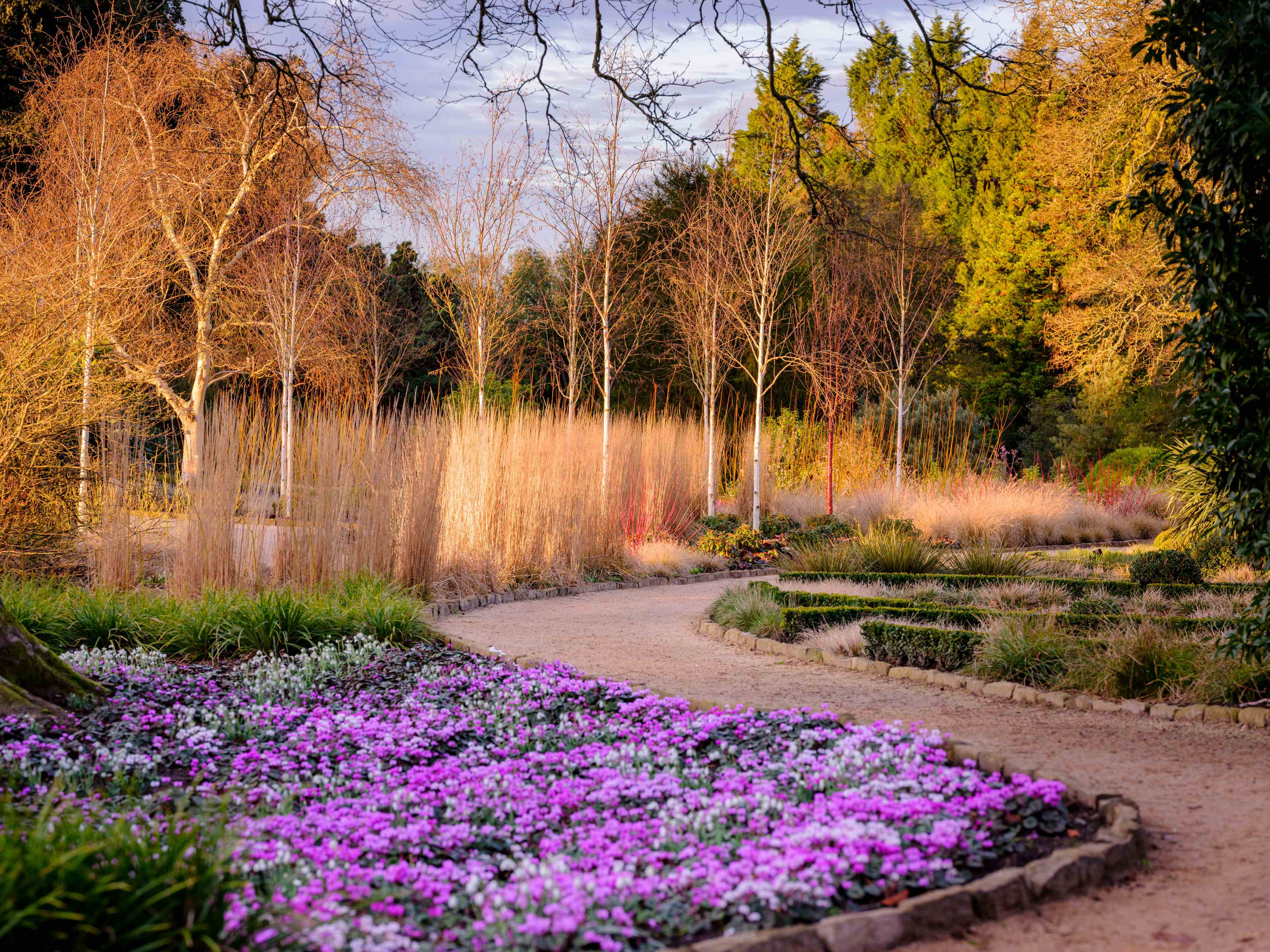 Colourful flowers in the Winter Garden at Wakehurst in wintertime