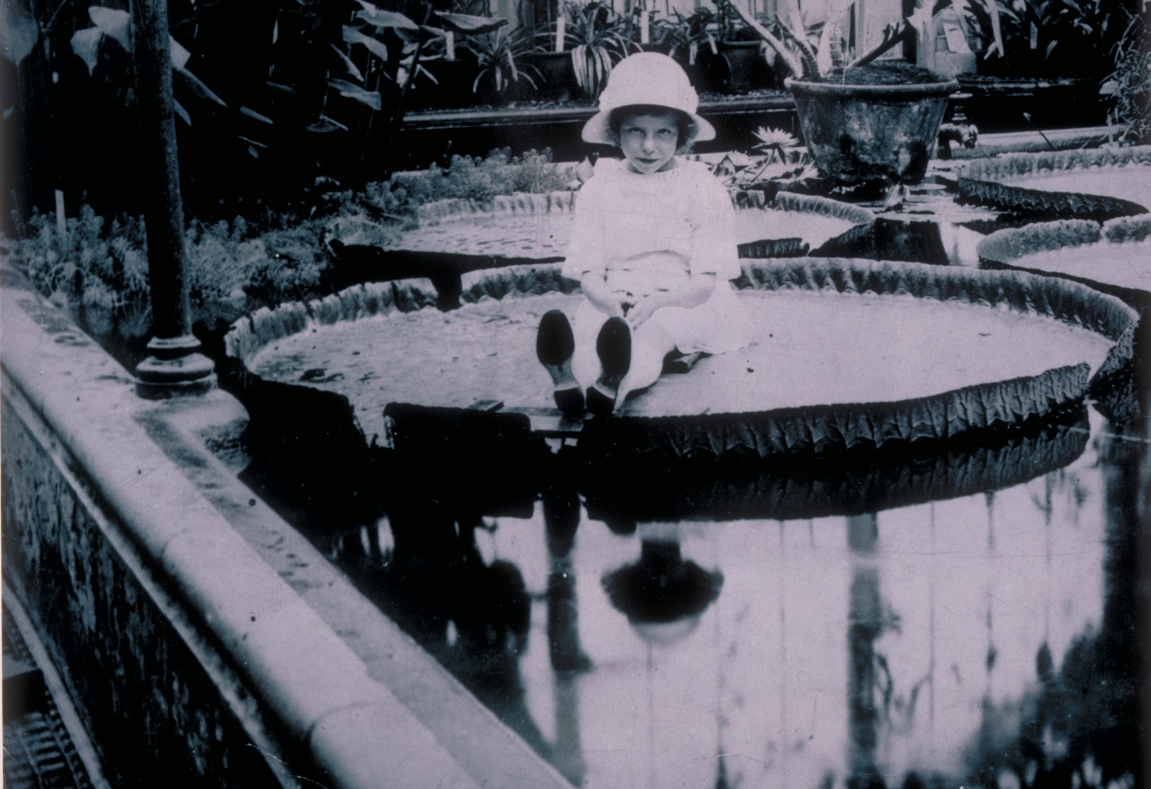 Miss Cotton, daughter of Kew's Herbarium Keeper Arthur Cotton, sitting on a Victoria amazonica waterlily in 1923
