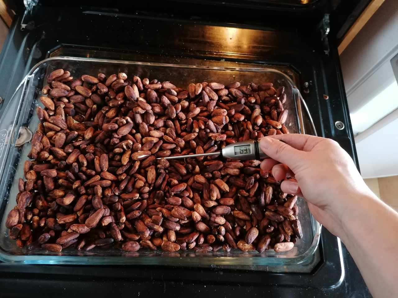Drying cacao beans in the oven
