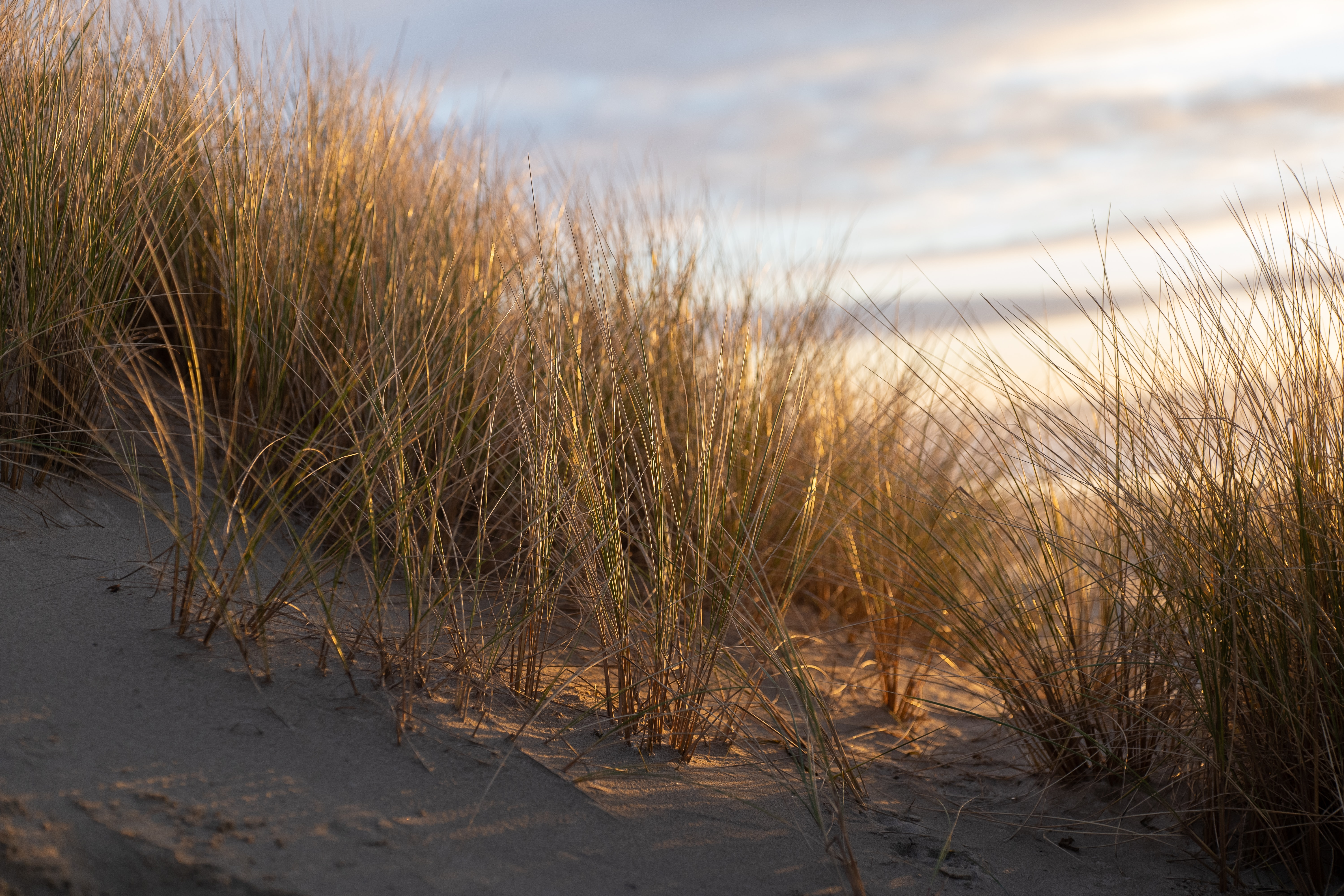 Grasses on the beach