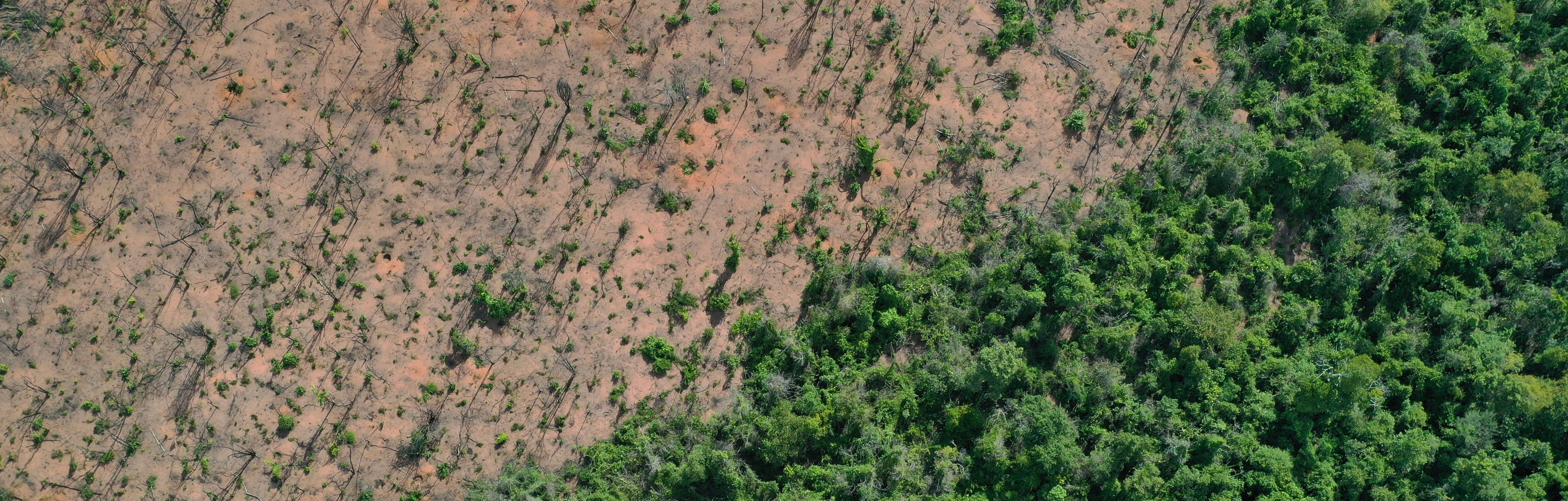 Drone photo showing large area of cleared forest
