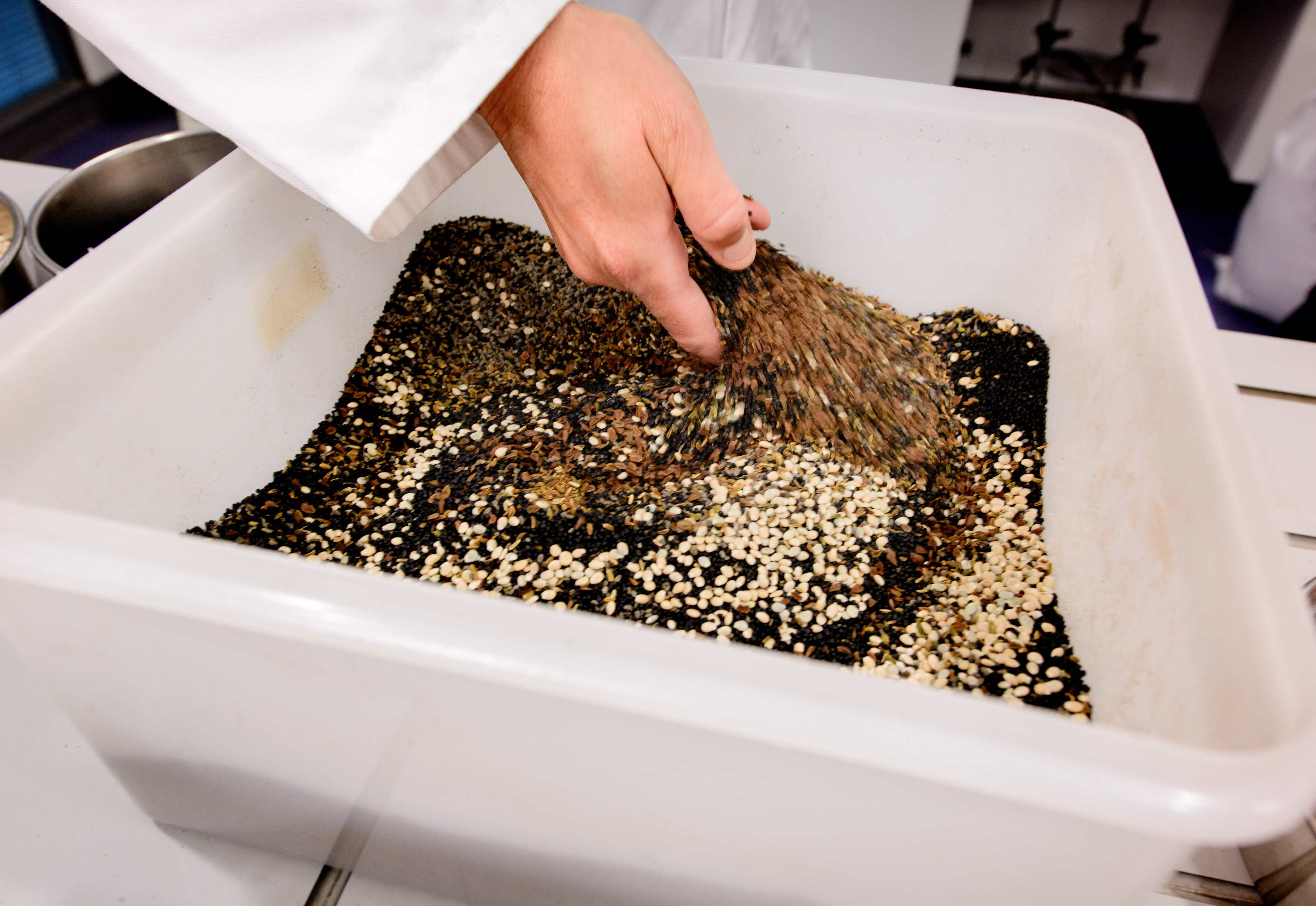 Mixing the seeds of different species for the American Prairie in a large container