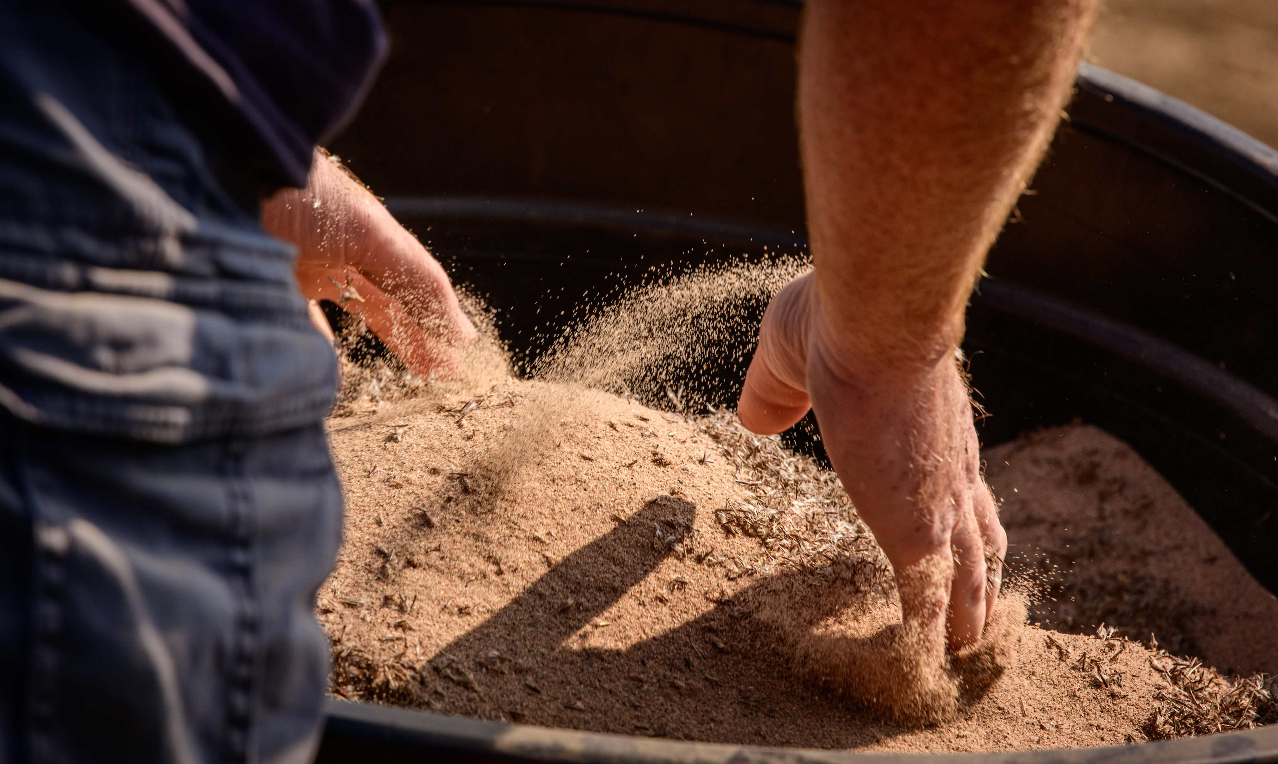 Close up of prairie seed being mixed with horticultural sand
