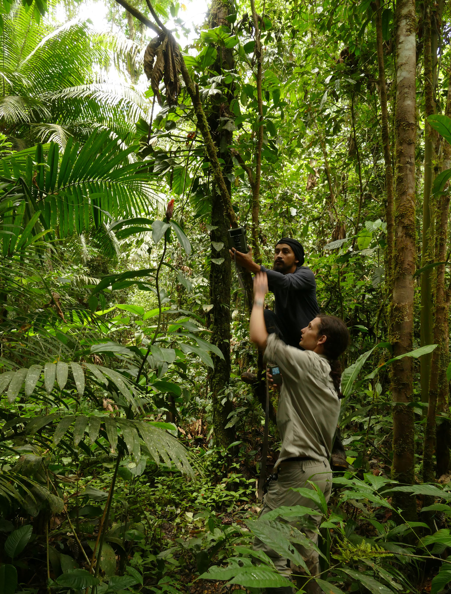 Rowan Schley collecting plant material in the Amazon rainforest