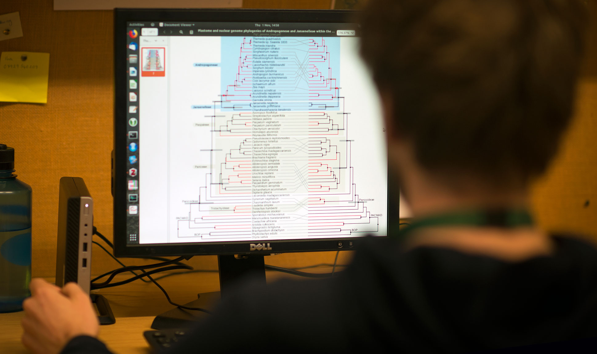 Researcher sat in front of computer screen with phylogenetic tree