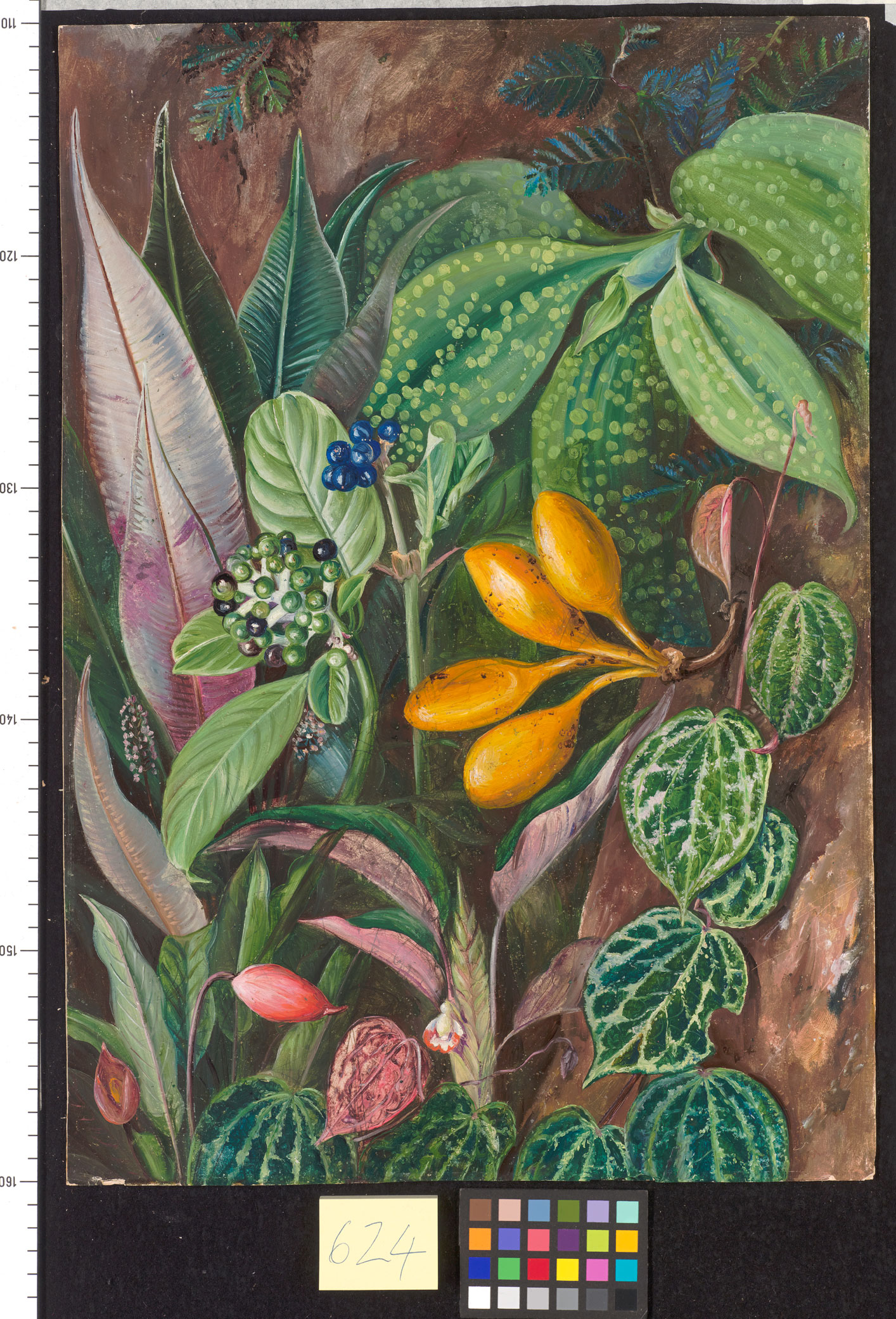 Full oil painting by Marianne North with the blue fruited shrub