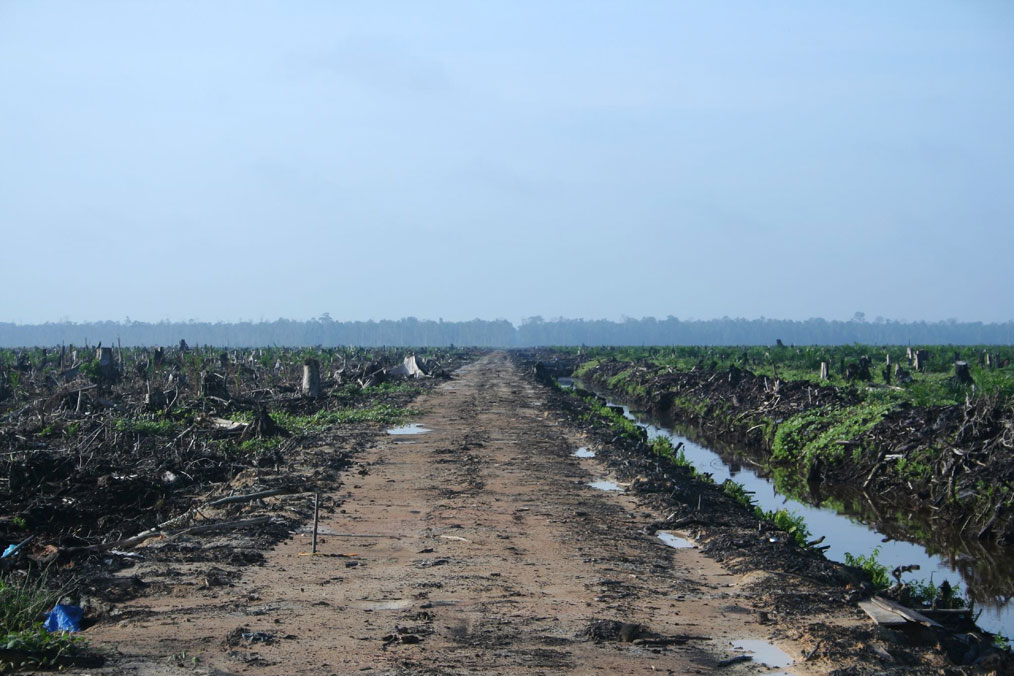Deforested and destroyed field