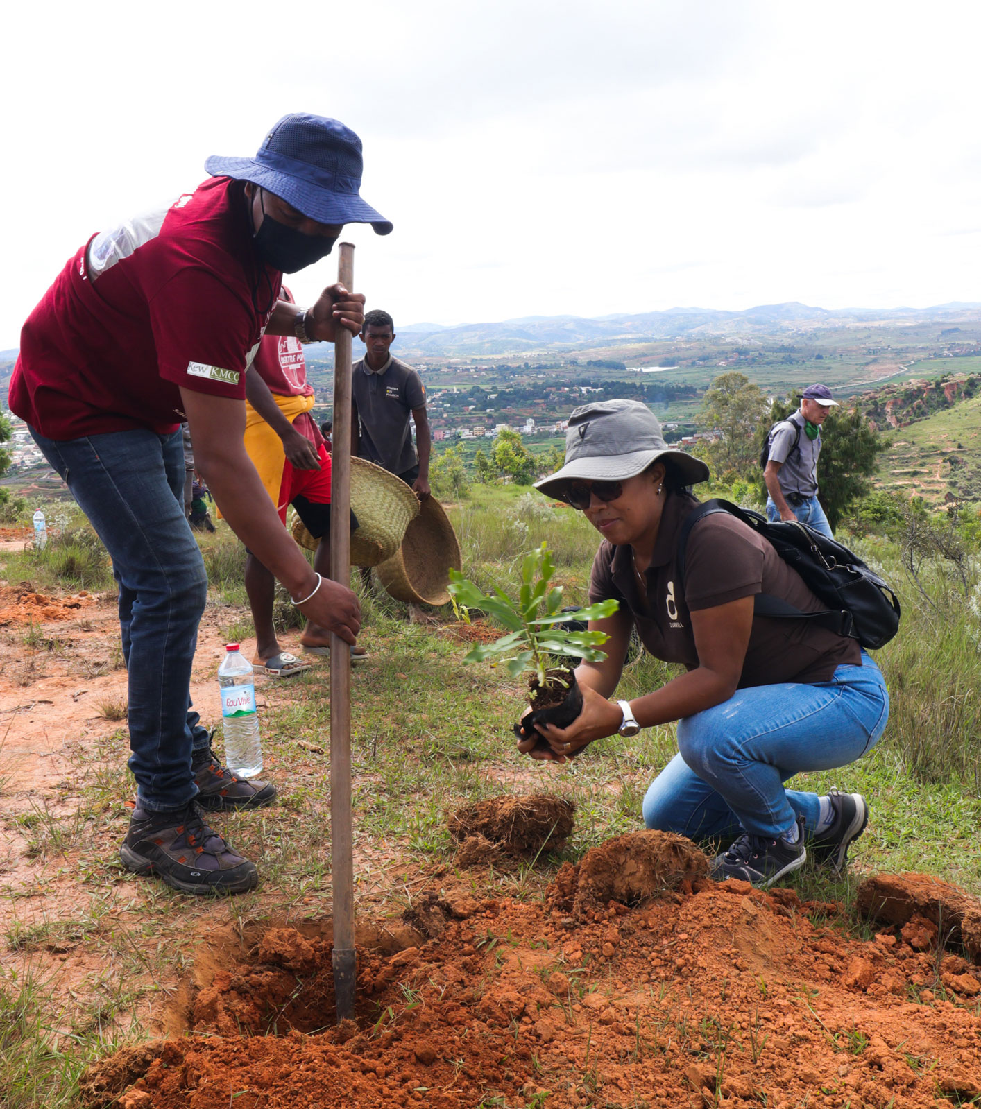 Researchers in Madagascar planting trees