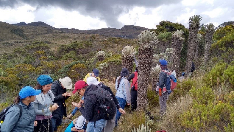 Image showing The 15 participants on the Seed Conservation Techniques training course in September 2017, assessing the quality of native seeds on the field trip to Páramo La Rusia in Boyacá