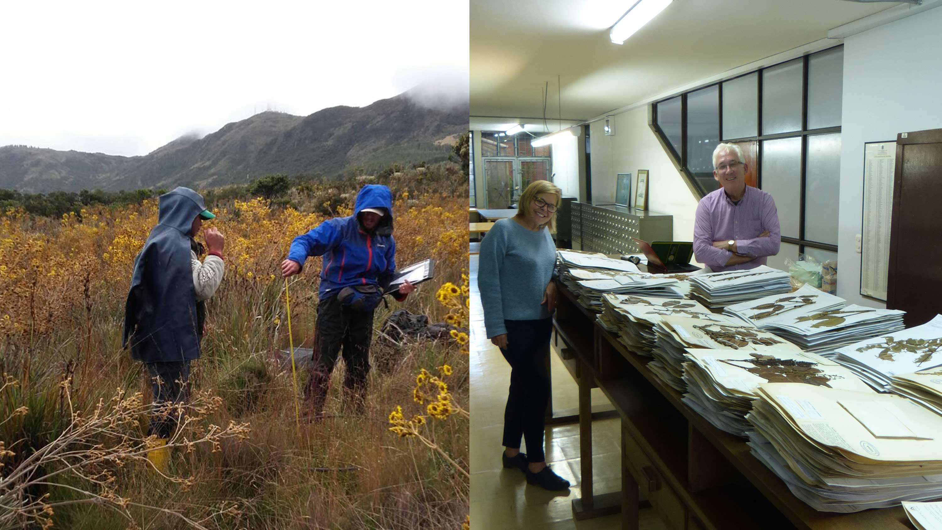 Image showing Taxonomic work to understand Boyacá's biodiversity of grasses (left) and legumes (right)