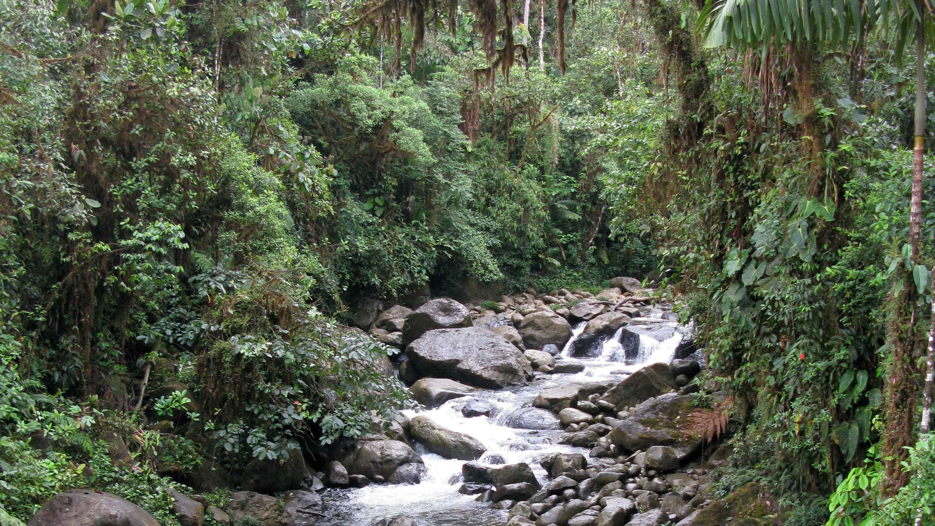 Image showing Rainforest at the Río Ñambí Nature Reserve in Nariño. Kew's plan for Colombia includes working in this department in 2018