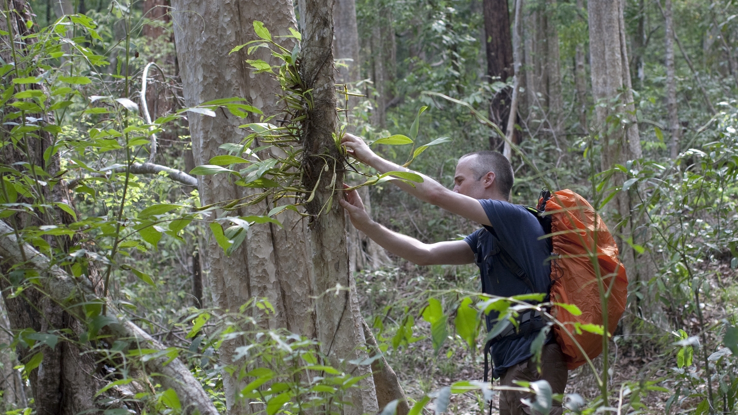 Cambodia: Collecting orchids (image supplied by Dr Andre Schuiteman)