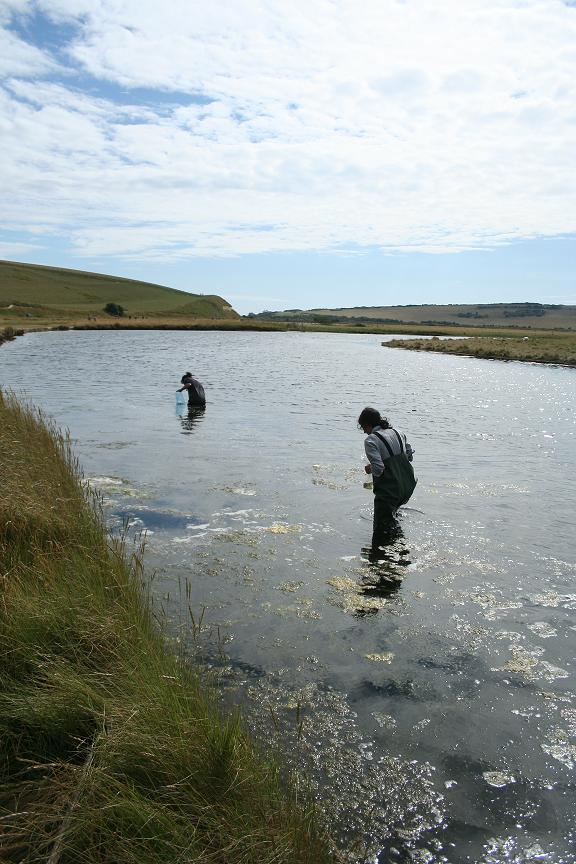 Photo of people wading in the Cuckmere River, East Sussex
