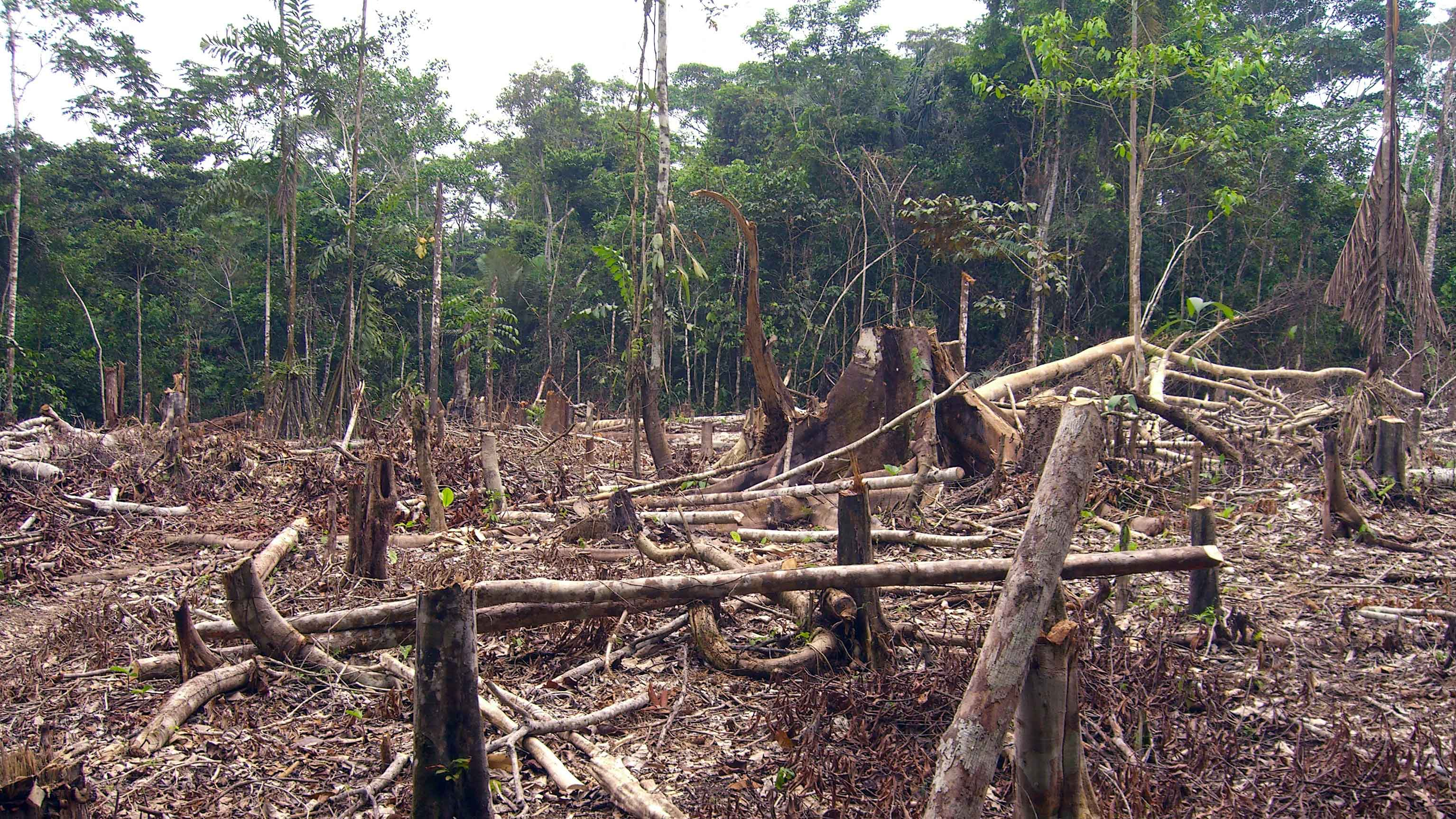 Image showing Deforestation of the Amazon forest in Colombia