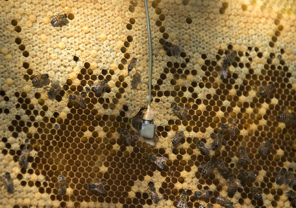 An accelerometer in a beehive at Kew