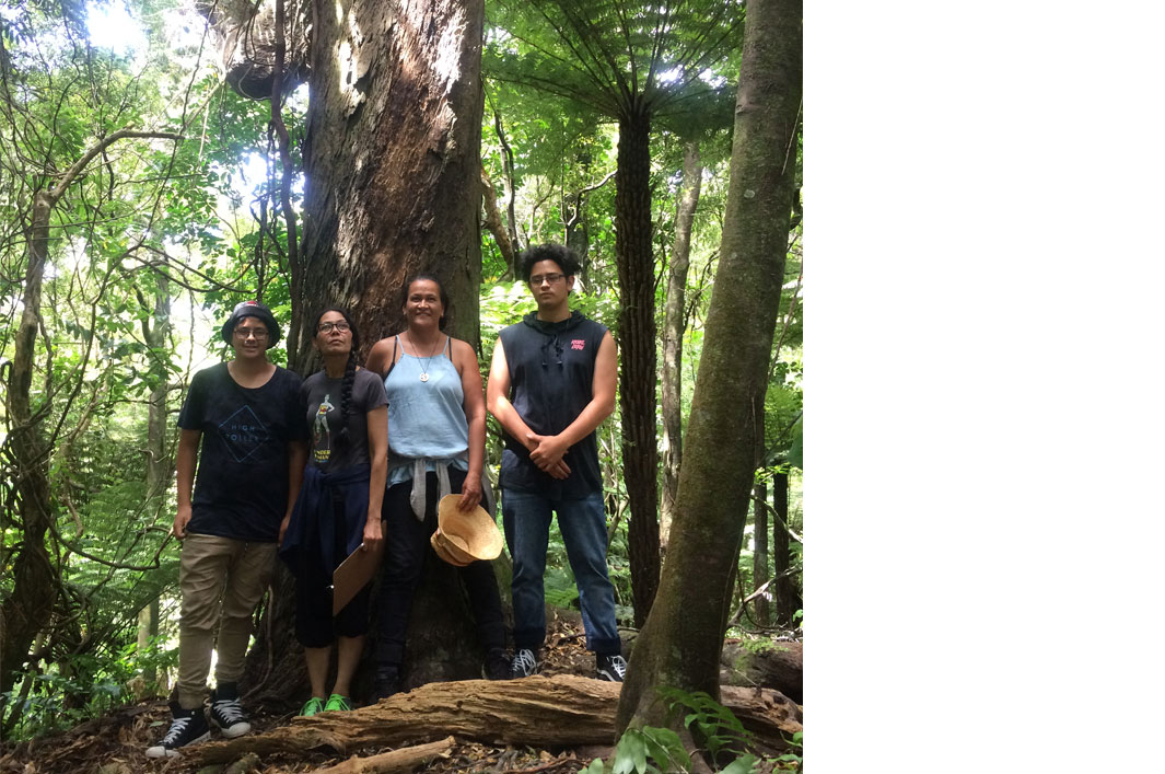Image showing Karioi and Poutu Taiapa with Kim Ranginui and Jodine White with endemic conifer Rimu (Dacrydium cupressinum) during the Seed Conservation Techniques course held at Ōtari-Wilton's Bush Reserve (Wellington), 11 to 15 December