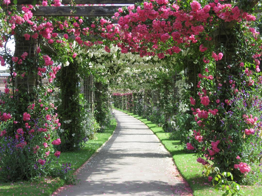The Rose Pergola in the Plant Family Beds
