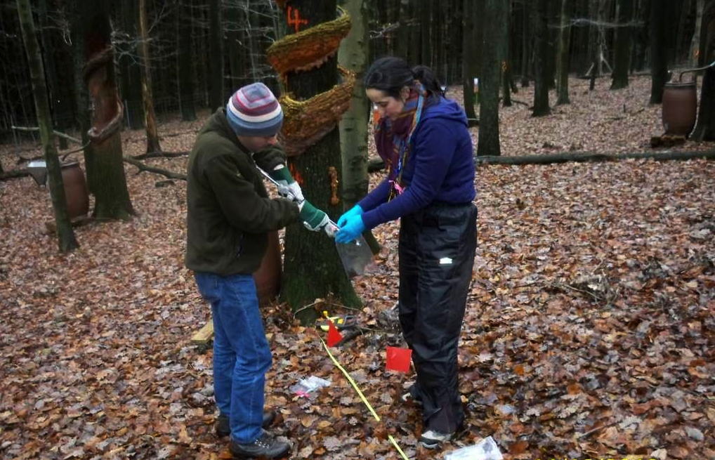 Picture shows Laura and Martin facing each other in woodland. Laura is holding open a bag into which Martin is placing a soil core.