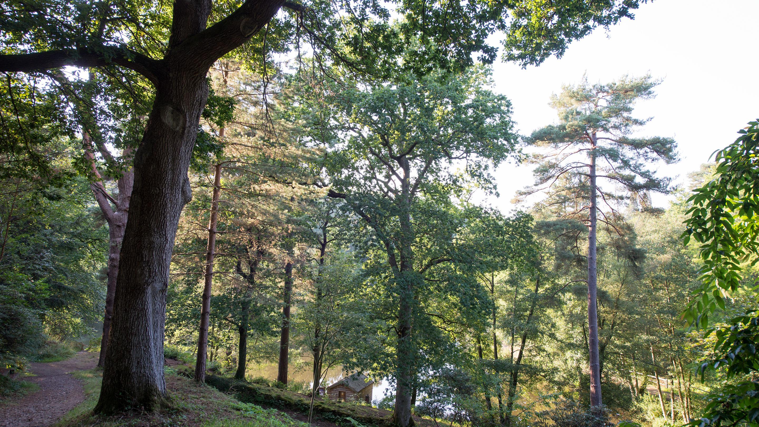 Wakehurst landscape
