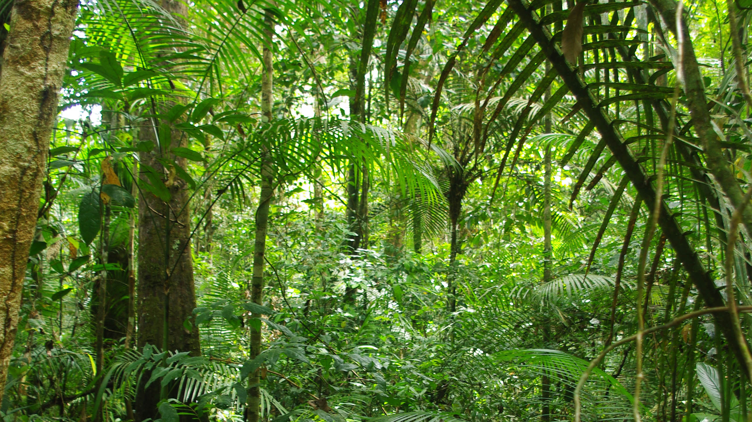 amazon rainforest research paper outline The main topic of this debate is the effects of the amazon deforestation on the people who live in it, this will be the focus of this research paper in this paper, i will discuss the history, causes, effects and solutions for the amazon rainforest deforestation.