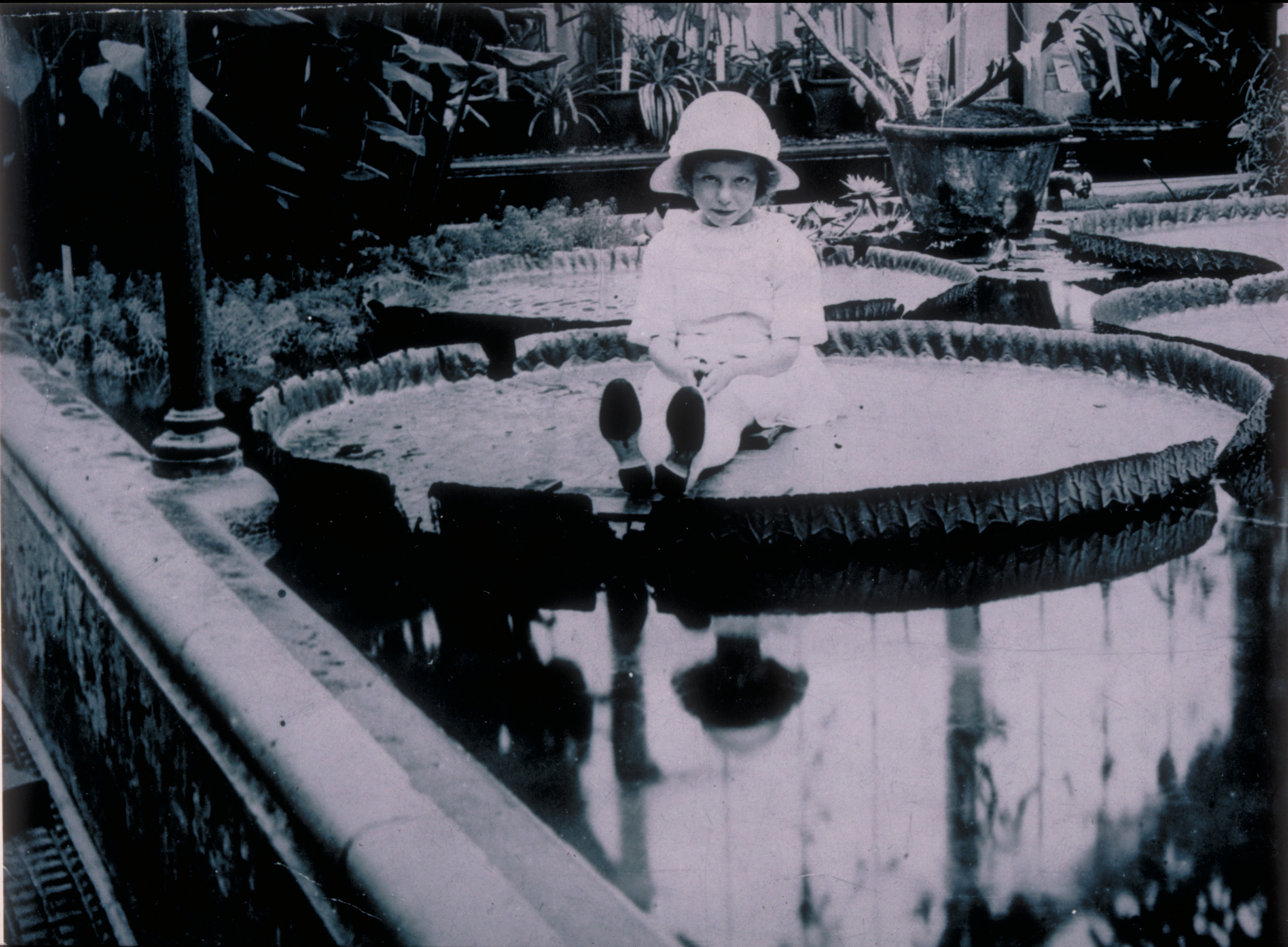 Miss Cotton, daughter of Kew's Herbarium Keeper Arthur Cotton, sitting on a Victoria amazonica waterlily, 1923