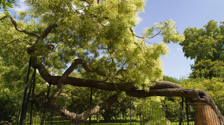 arboretum kew