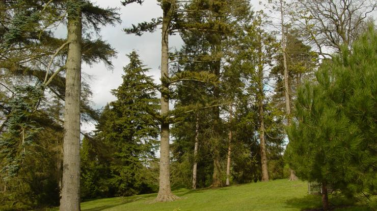 The Pinetum at Wakehurst
