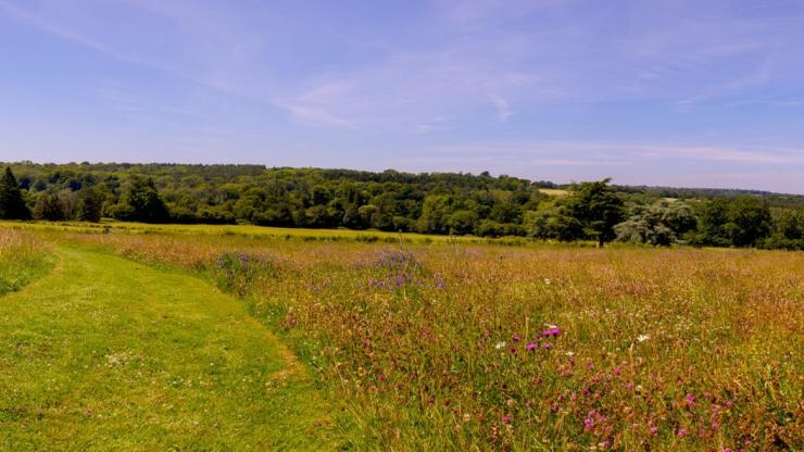 Coronation meadow