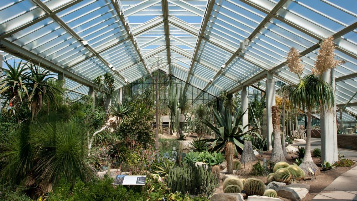 View of species from the dry tropics in the Princess of Wales Conservatory