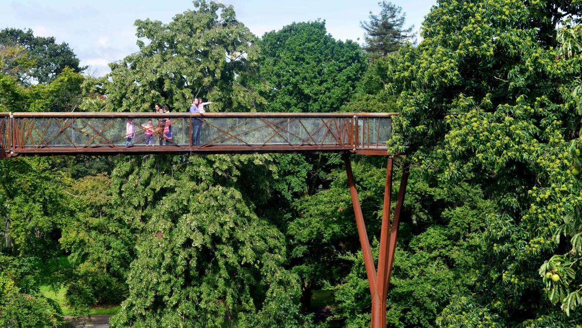 A view of the Treetop walkway