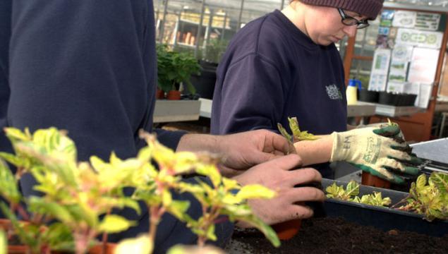 Propagating plants in the nursery