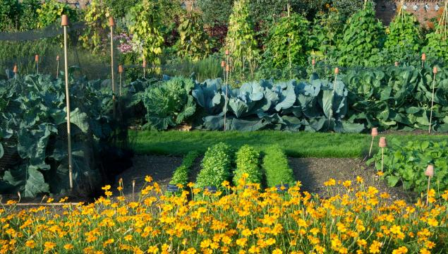 Kew's Kitchen Garden