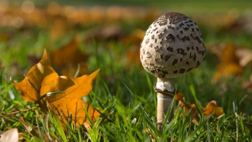 Fungi in autumn