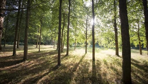 Wakehurst trees