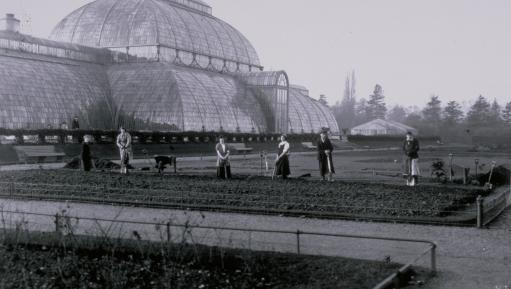 Women gardeners at Kew Gardens 1915