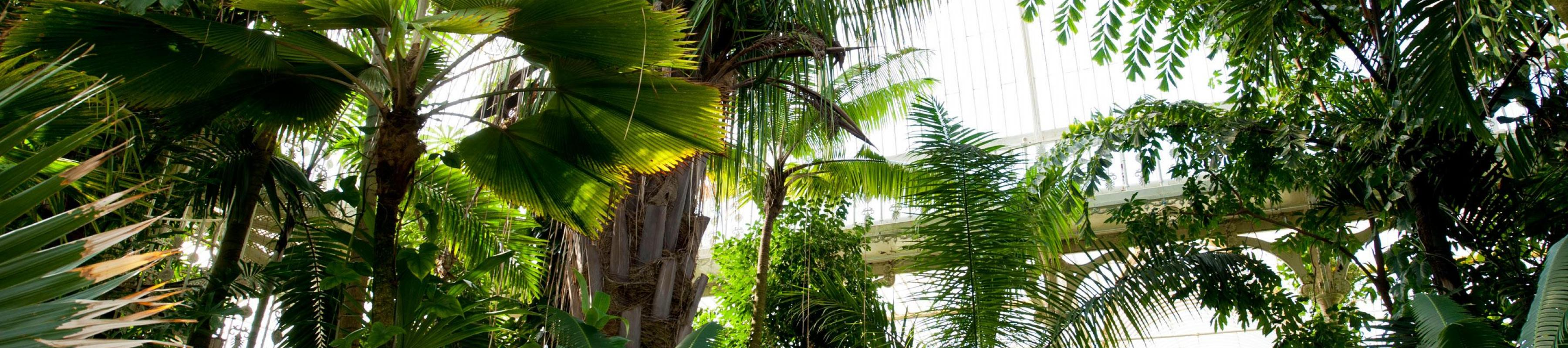 Interior shot of the Palm House canopy