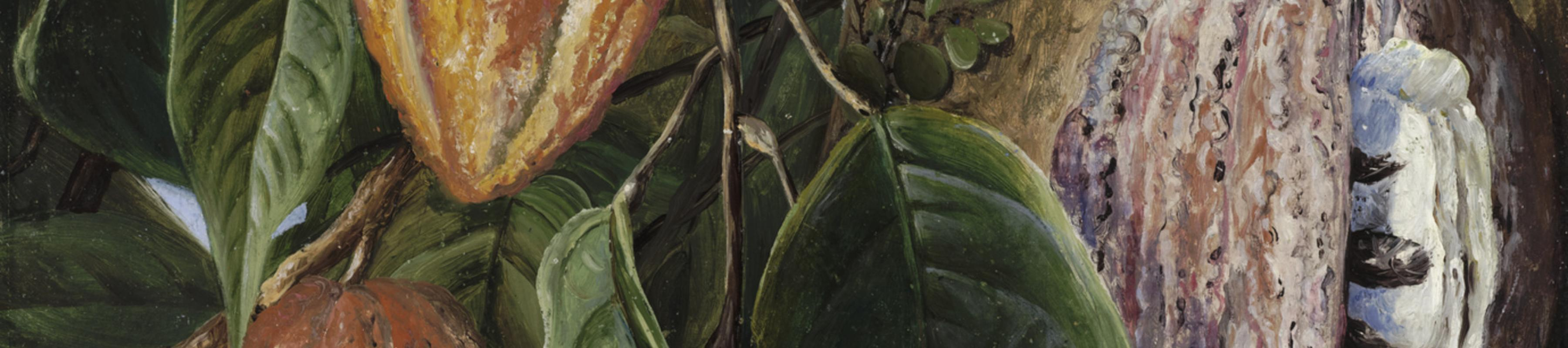 Oil painting of a cocoa tree by Marianne North