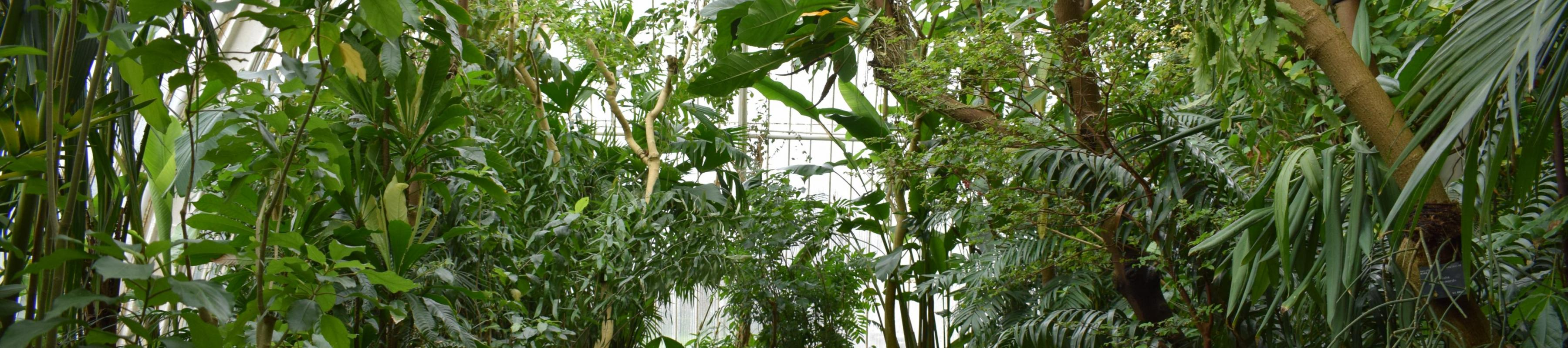 Interior of the Palm House