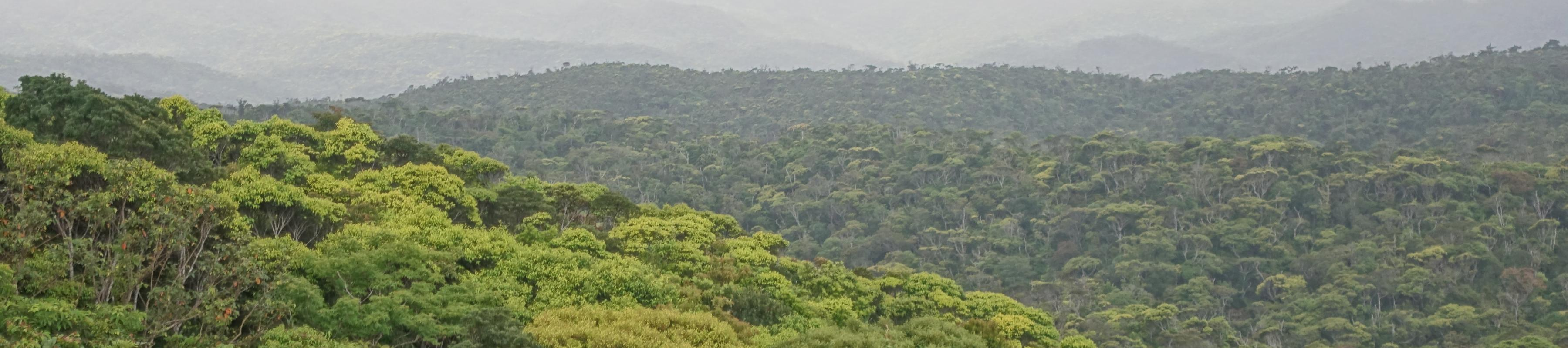 Aerial view of forest.