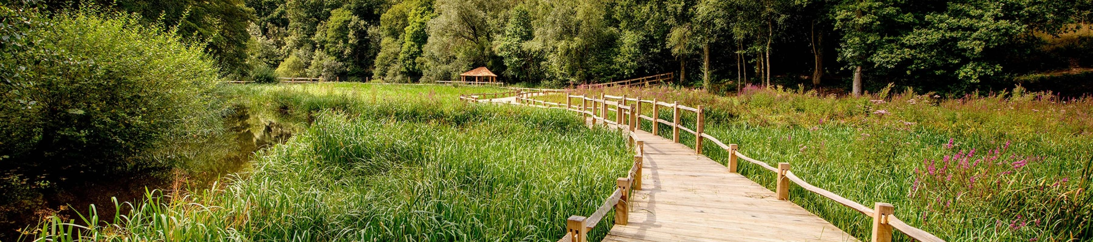 The board walk sweeping across the Wetlands at Wakehurst