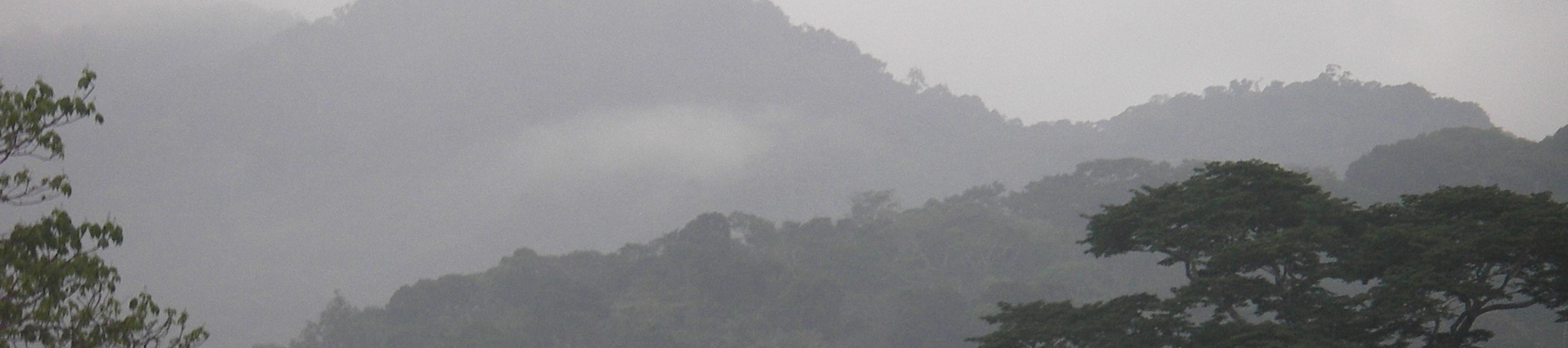 Cloudy forest Cameroon