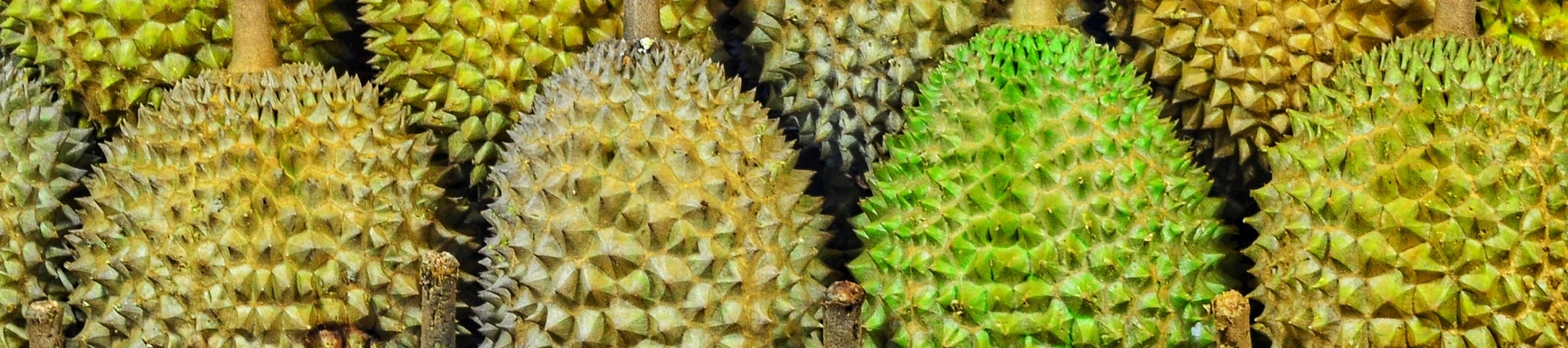 Durian  The king of fuit  | Kew