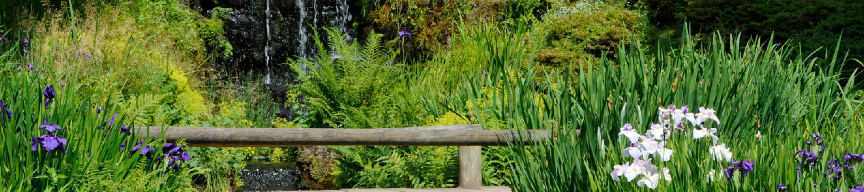 Iris Dell at Wakehurst