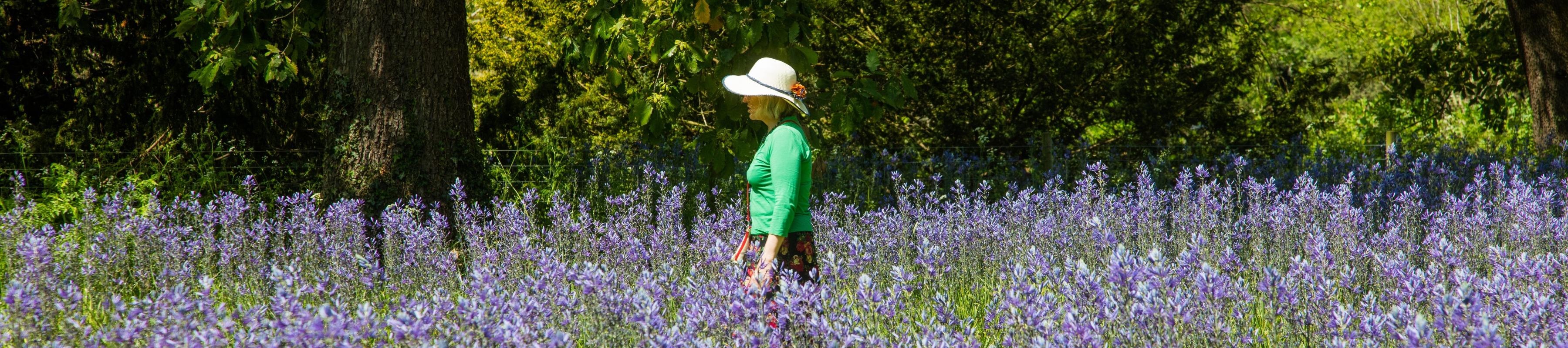 A visitor wanders through the bluebells at Kew Gardens