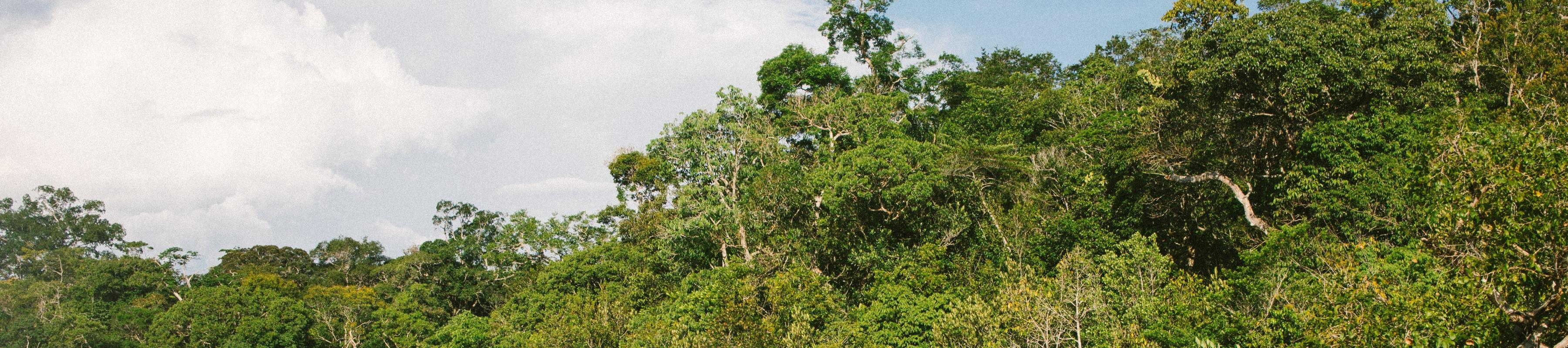 The treetops of an Amazon scene