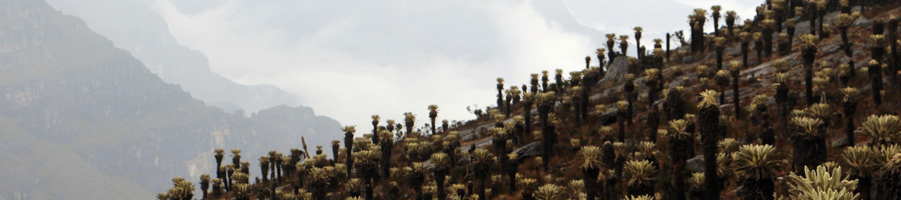 Spiky plants on a mountain with clouds around