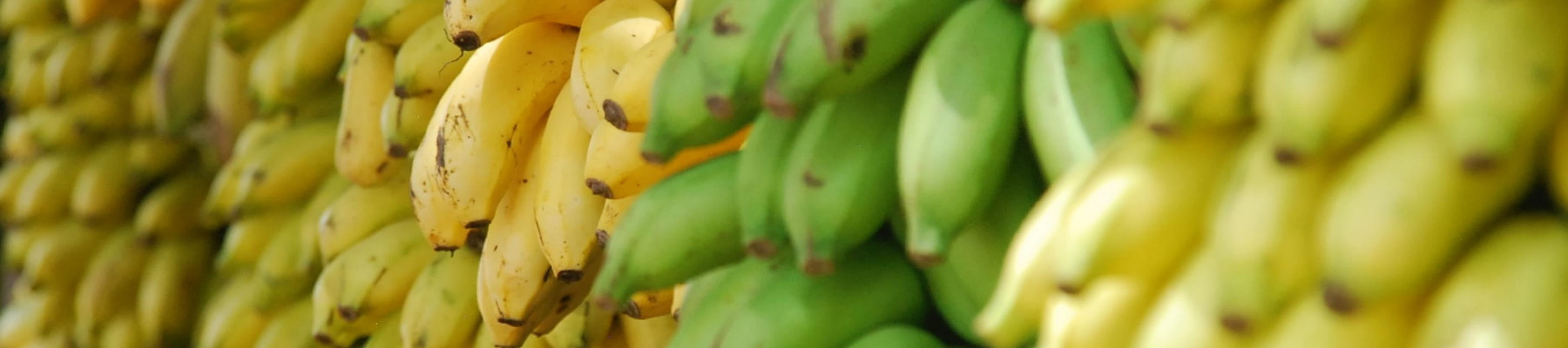 Bananas in a pile