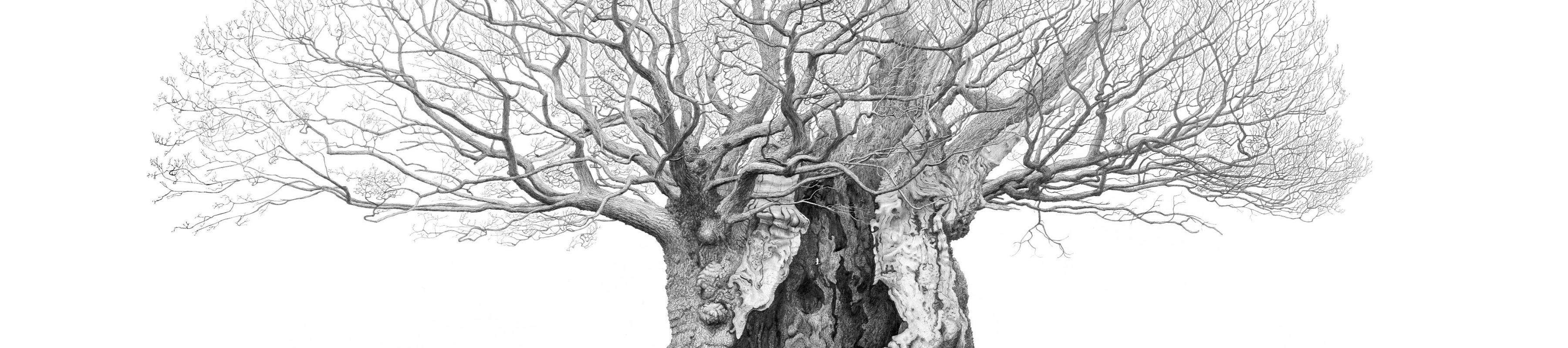Drawing of Queen Elizabeth Oak in Sussex by artist Mark Frith