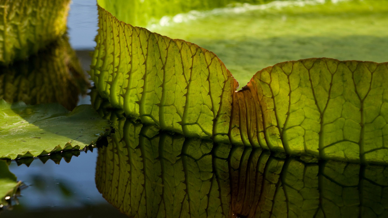 Waterlily House Kew