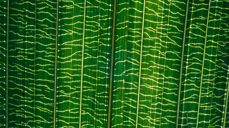 Palm Hydraulics